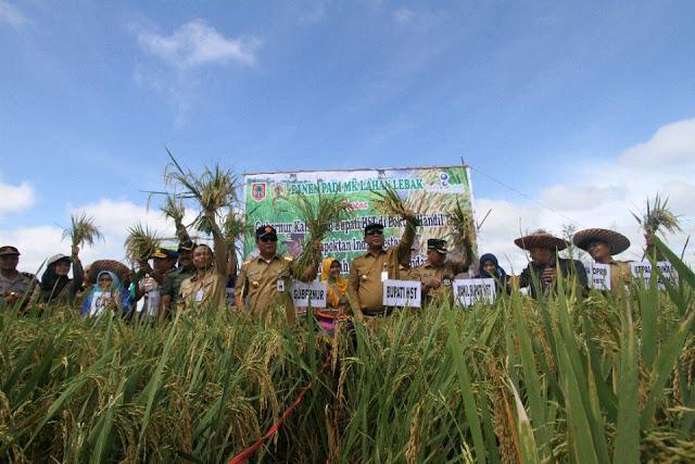 Paman Birin, Gubernur Kalsel pada Saat Panen Padi Bersama dengan Bupati HST, H Abdul Latif di Desa Kayu Rabah, Kabupaten HST