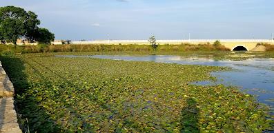Pat Kellner, Texas Freshwater Fly Fishing, Sunfish, Fly Fishing for Sunfish, Fly Fishing retention ponds, Cedar Park Fly Fishing, Fly Fishing the Austin Area, Fly Fishing Texas, Texas Fly Fishing, Texas Freshwater Fly Fishing, TFFF