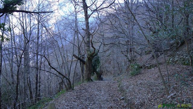 Bosque previo a Víboli