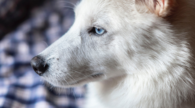 The Most Effective Way to Calm Anxious Pups