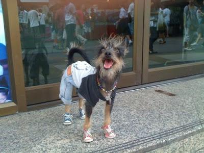 Foto divertida de perro