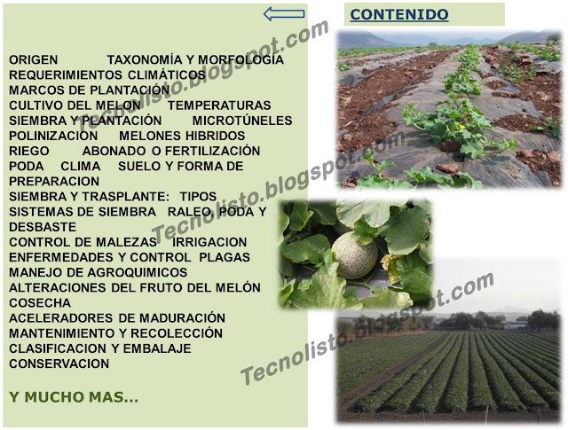 """""""Contenido manual cultivo del melon"""""""