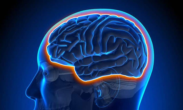 Functional Neurology: The Blood-Brain Barrier and Brain Health | El Paso, TX Chiropractor