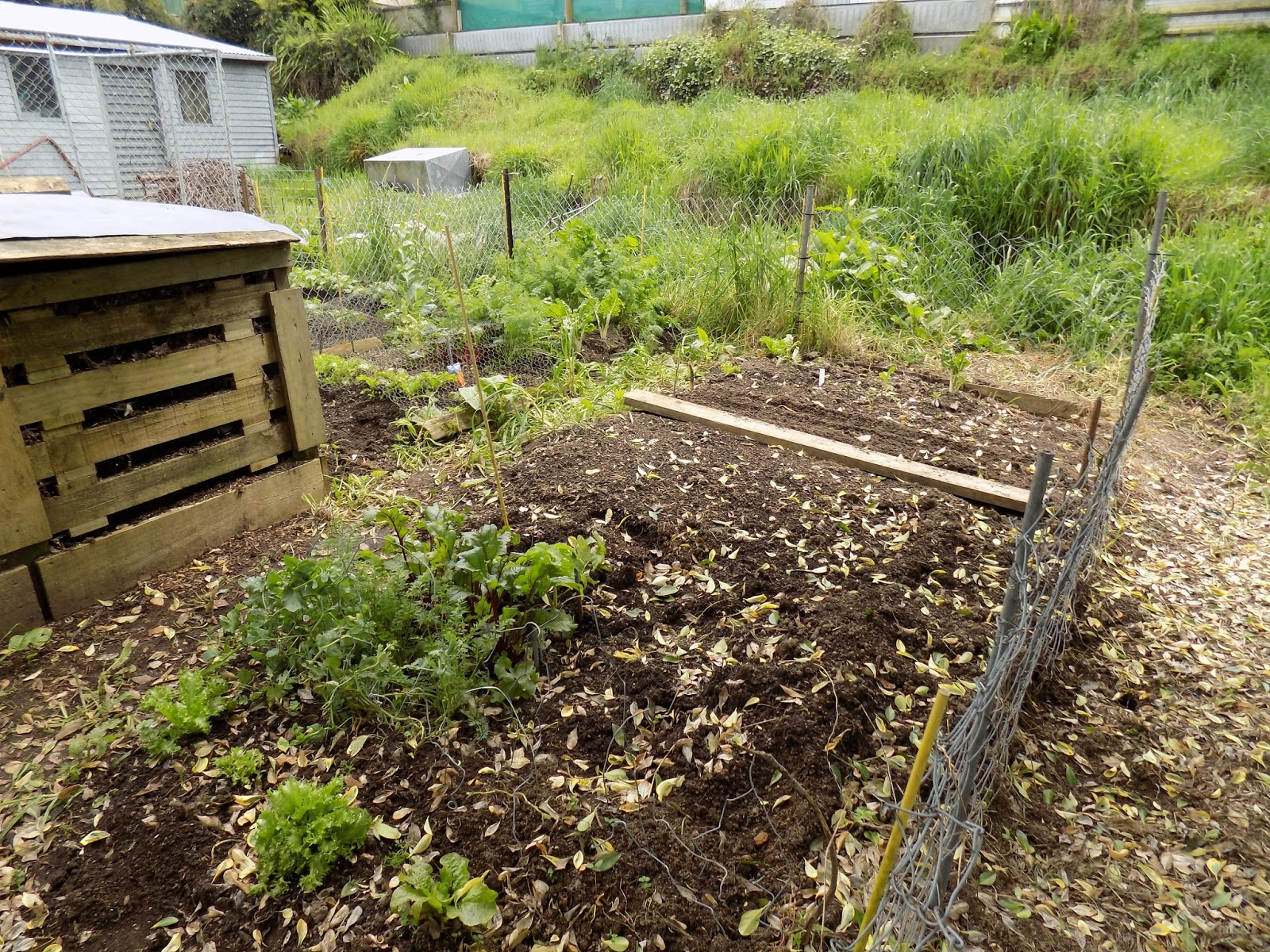 Mumsey\'s Ramblings: So How Does the Garden Go