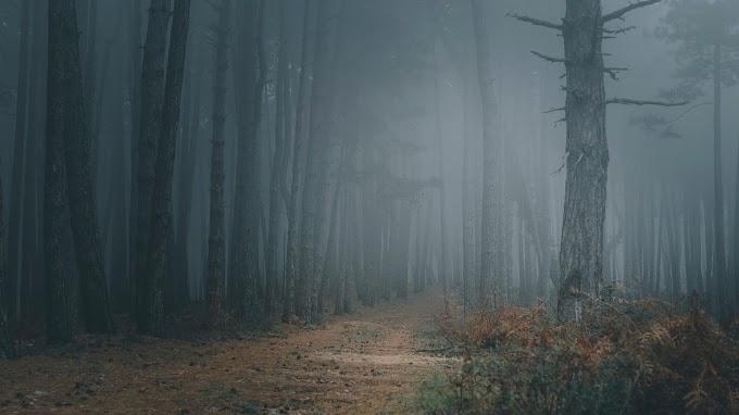 Floresta, Nevoeiro, Árvores, Caminho, Escuridão