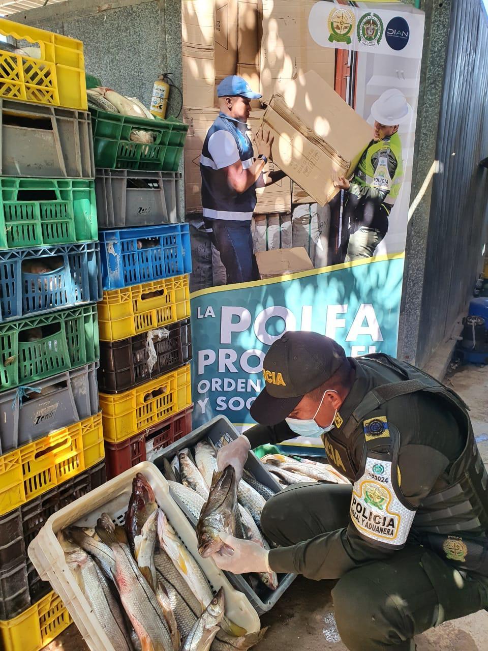 https://www.notasrosas.com/Polfa decomisa en Maicao 2.848 kilos de pescado por más de 28 millones de pesos