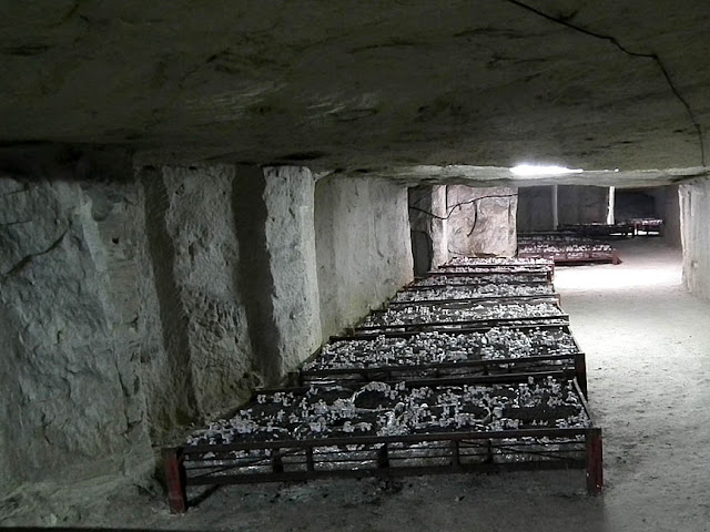 Mushrooms being cultivated in a former underground quarry. Loir et Cher. France. Photo by Loire Valley Time Travel.