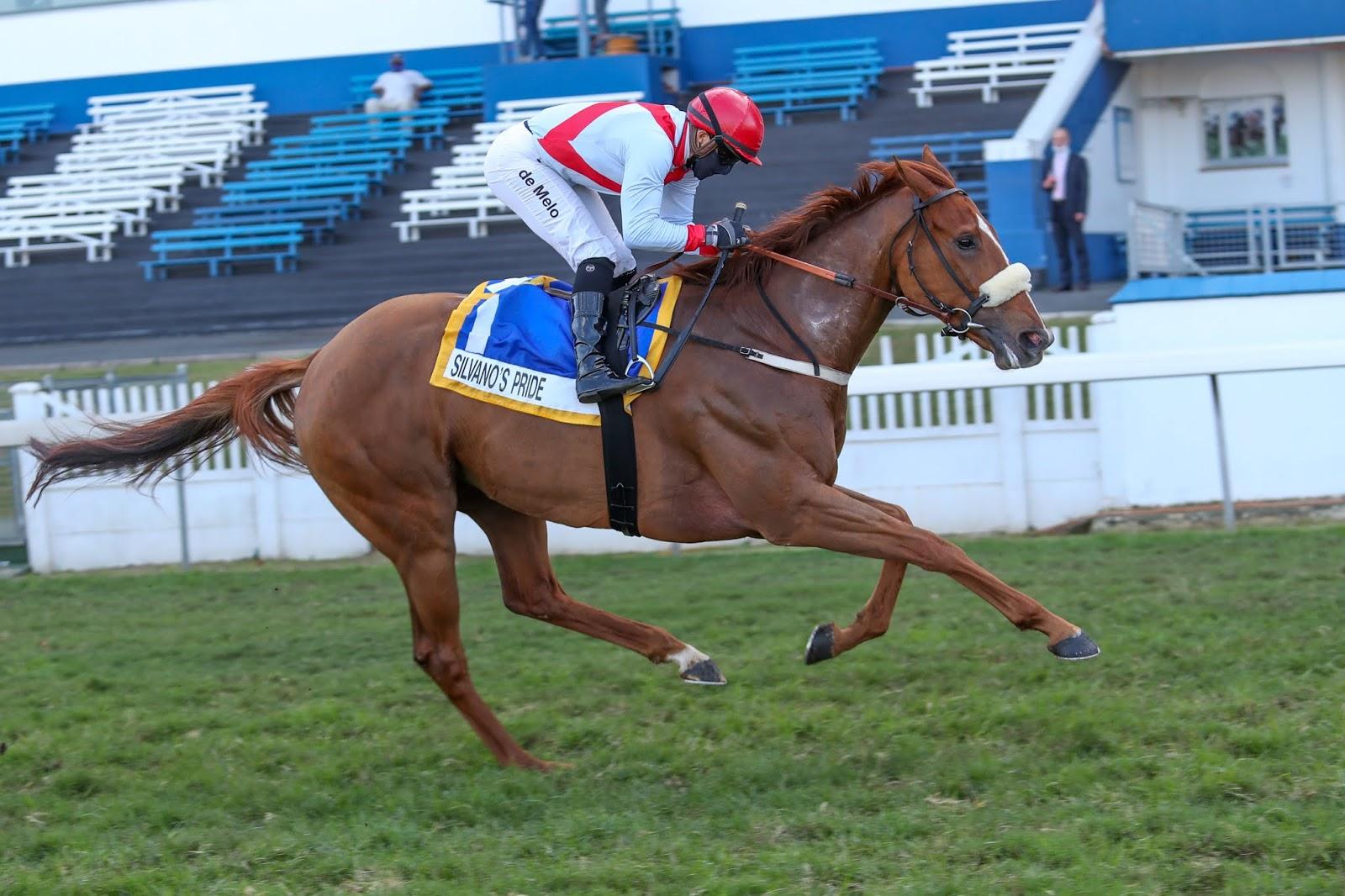 Vodacom Durban July 2020 Horse Profile - Silvano's Pride