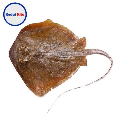 Ikan Pari 500 Gram