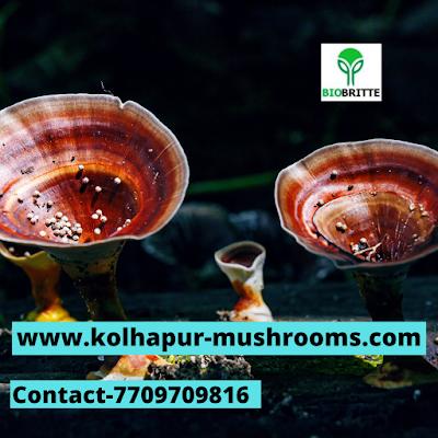 Scope Of Ganoderma Mushroom In Saudi Arabia.