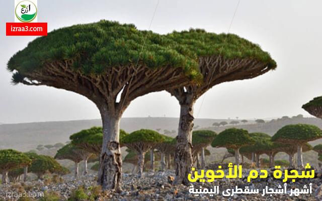 izraa3.com
