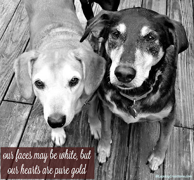 2 senior dogs, Our faces may be white, but our hearts are pure gold