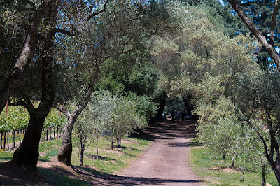Narrow path through the vineyard.