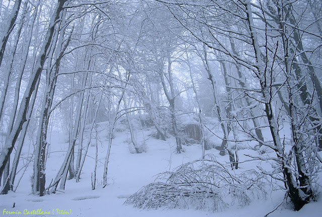 Hayedo nevado