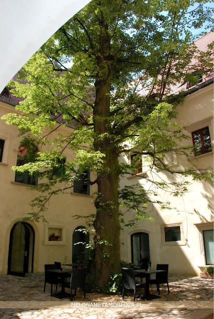 duże drzewo przy domu