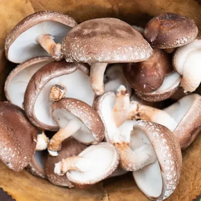 Mushroom wholesale Market in Maharashtra