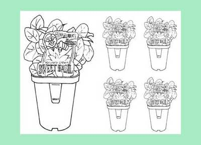 Download Potted Basil Colouring Page Preview