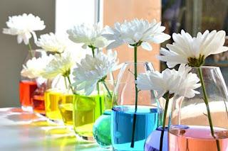 fiori in vasi colorati immagine