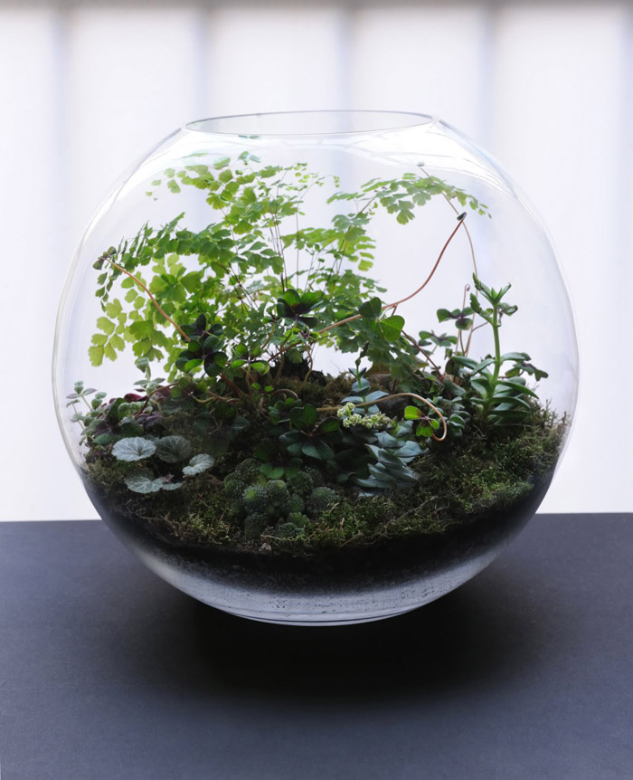 Dispatches From France Grow Little Terrariums Poppytalk