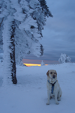 Tao y fulgor boreal