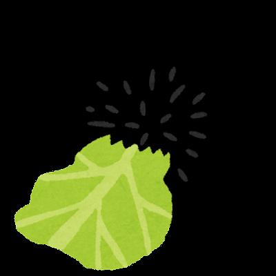 キャベツを食べるウニのイラスト