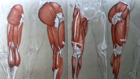 The Figurative Drawing Course The Legs- Anatomy to Drawing