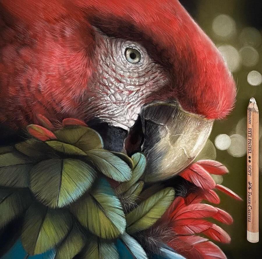 08-Green-wing-macaw-Paul-Miller-www-designstack-co