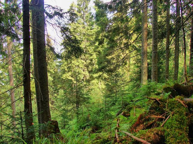 Лес на склоне хребта Чортка