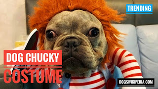 Dog in Chucky costume, Chucky doll dog costume, Chucky dog Halloween costume, dog with Chucky costume, dog wearing Chucky Costume