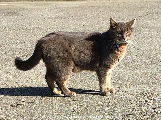 Katze auf der Strasse