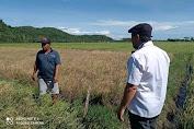 Hari Tani 2021, Jemi Yusuf : Petani Miliki Kontribusi Besar Terhadap Ketahanan Pangan Nasional