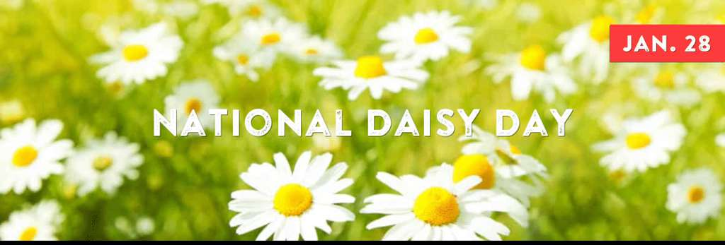 National Daisy Day Wishes Sweet Images