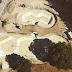 2020 : le nouveau skatepark de Fontainieu, à Marseille