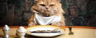 وصفات أكل القطط المنزلية وطريقة تحضيرها بسهولة وبوصفات ستحبها قطتك