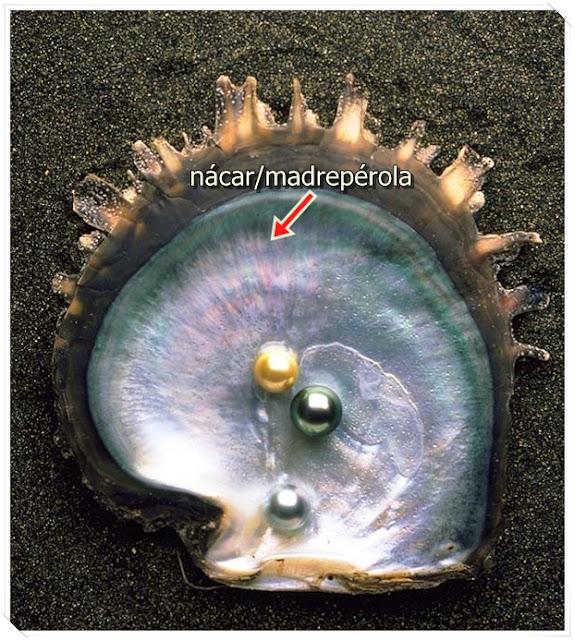Tipos de Pérola #7/10 - Shell