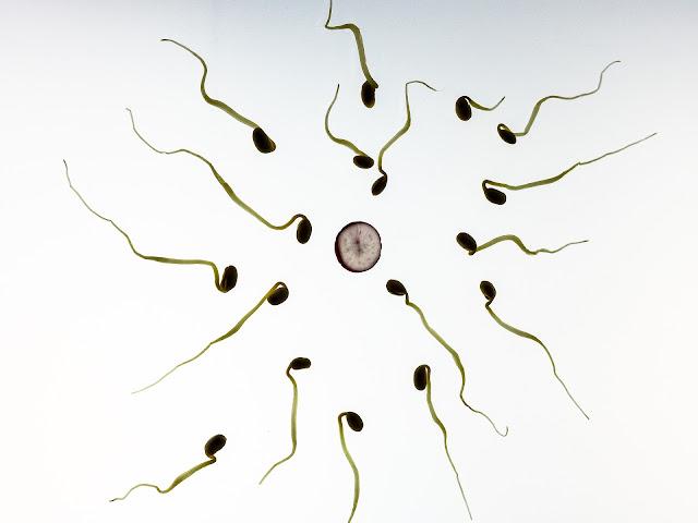 Makanan yang Bisa Meningkatkan Jumlah dan Kualitas Sperma