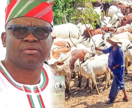 Fayose frees detained cows, signs peace deal with Fulani herdsmen