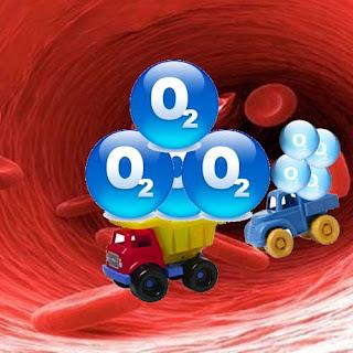молекулы гемоглобина доставляют кислород тканям