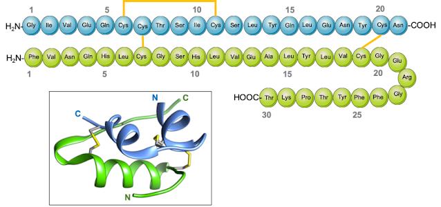 Struktur kimia dari Insulin Manusia beserta bentuk 3D nya
