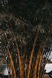 Benifits of bamboo in hindi