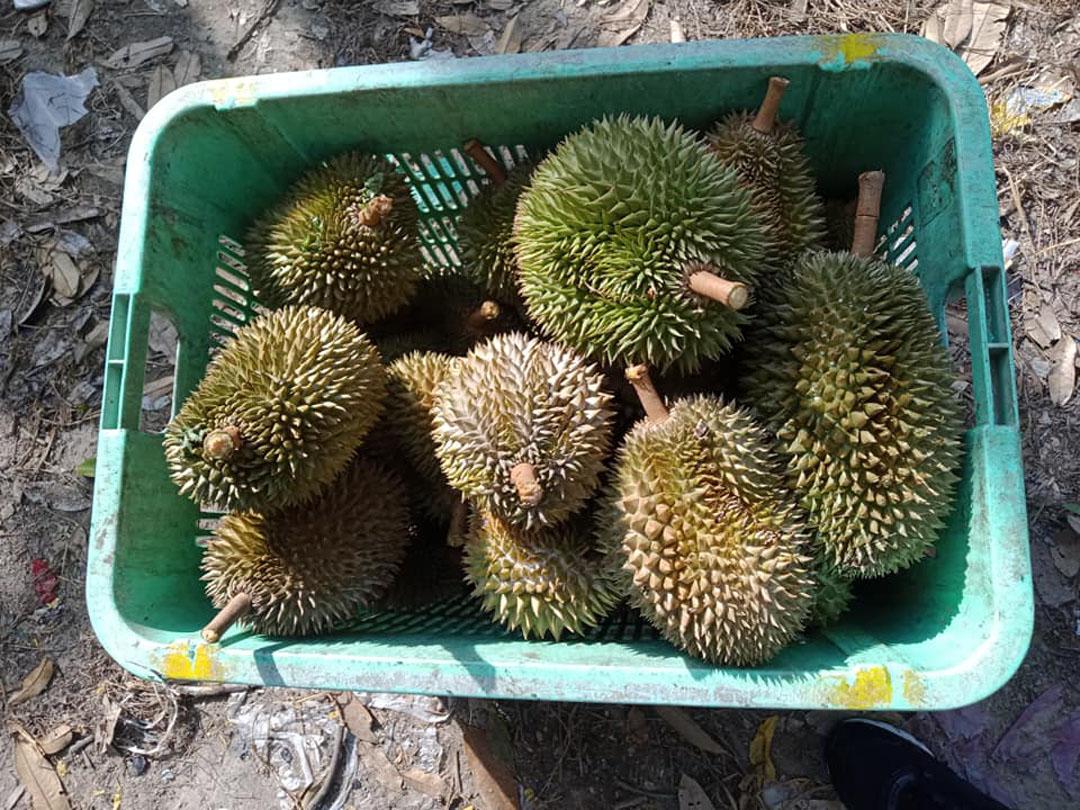 Senarai Jualan Harga Buah Durian Popular Pulau Pinang