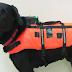 OMG!! TV ही नहीं अब कुत्ते भी होंगे रिमोट से कंट्रोल, जैकेट का हुआ आविष्कार