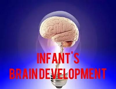 Infant's brain development