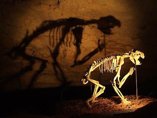 『ティラコレオ (Thylacoleo)』 (和名: フクロライオン) in Naracoorte Caves National Park