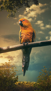 Parrot Mobile HD Wallpaper