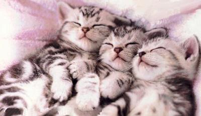 Gambar Kucing Lucu Imut