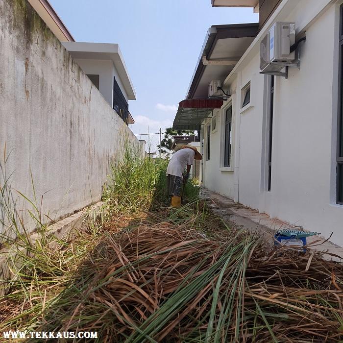 Clearing Weeds Using Hoe Garden Tool