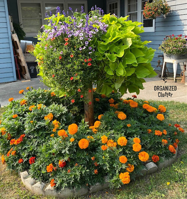 Photo of a small flower garden in August