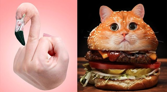 Its Quite Different: Middle-Finger Flamingo, Burger-Cat; 9 Photo Manipulation Pictures that become Trending on Social Media.