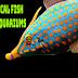 Tropical Fish And Aquariums